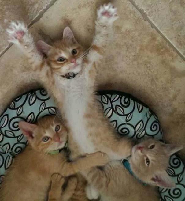 Γάτες που... κάνουν τα δικά τους! #28 (3)