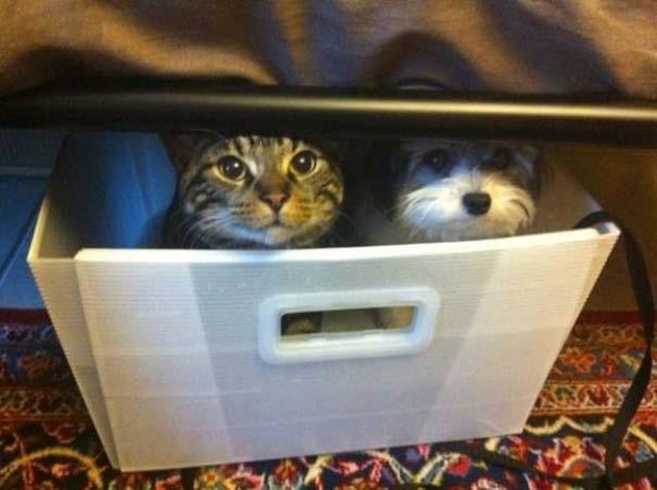 Γάτες που... κάνουν τα δικά τους! #28 (4)