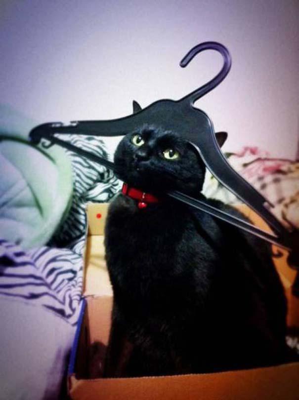 Γάτες που... κάνουν τα δικά τους! #28 (8)