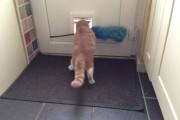 Γάτες που... κάνουν τα δικά τους! #28 (12)