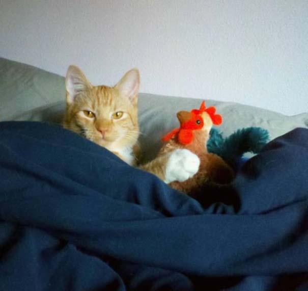 Γάτες που... κάνουν τα δικά τους! #28 (13)