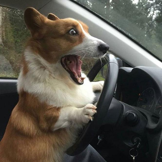 Πρώτη μέρα στο τιμόνι | Φωτογραφία της ημέρας