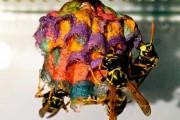 Έδωσαν σε σφήκες χρωματιστό χαρτί κι αυτές έφτιαξαν σφηκοφωλιές - ουράνιο τόξο (6)