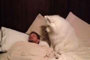 Αυτός ο σκύλος ξύπνησε το αφεντικό του με τον πιο χαριτωμένο τρόπο