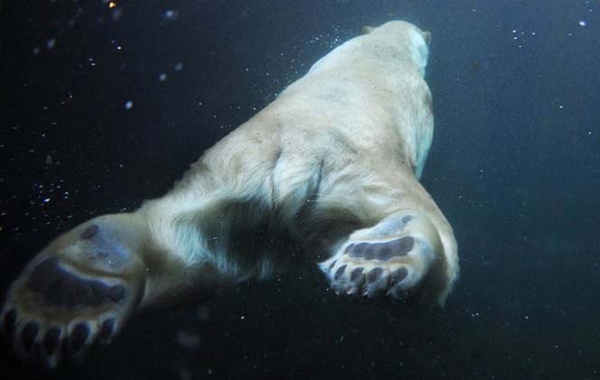 15 συνηθισμένα ζώα όπως δεν τα έχετε ξαναδεί (5)