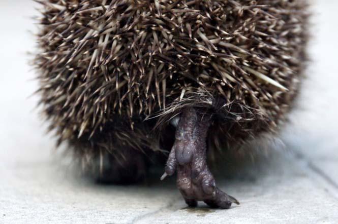 15 συνηθισμένα ζώα όπως δεν τα έχετε ξαναδεί (8)