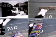 Ταχυδρόμος και άγρια γάτα