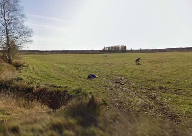Δείτε τι συνέβη όταν ένα άλογο συνάντησε το αυτοκίνητο του Google Street View (5)