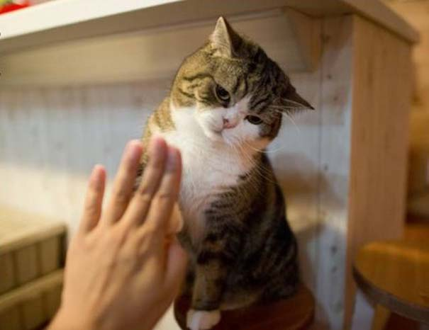 Υπάρχουν δυο τύποι γάτας (1)