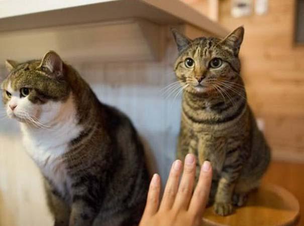 Υπάρχουν δυο τύποι γάτας (3)