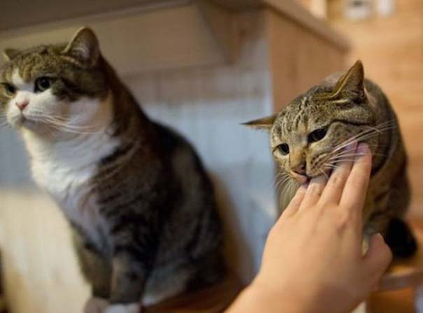 Υπάρχουν δυο τύποι γάτας (4)