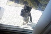 Ζώα που θέλουν πολύ να μπουν μέσα (8)