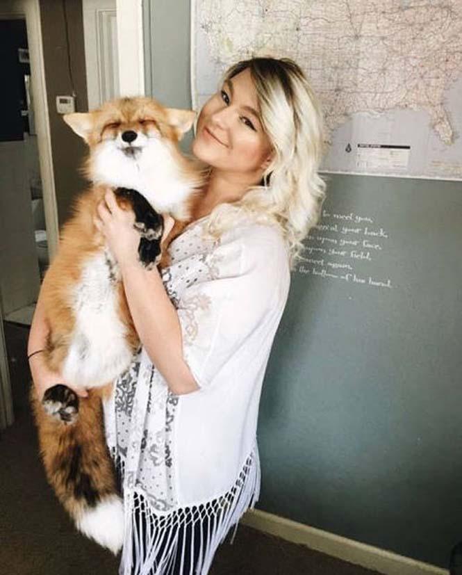 Αλεπού και σκύλος έχουν γίνει αχώριστοι φίλοι (11)