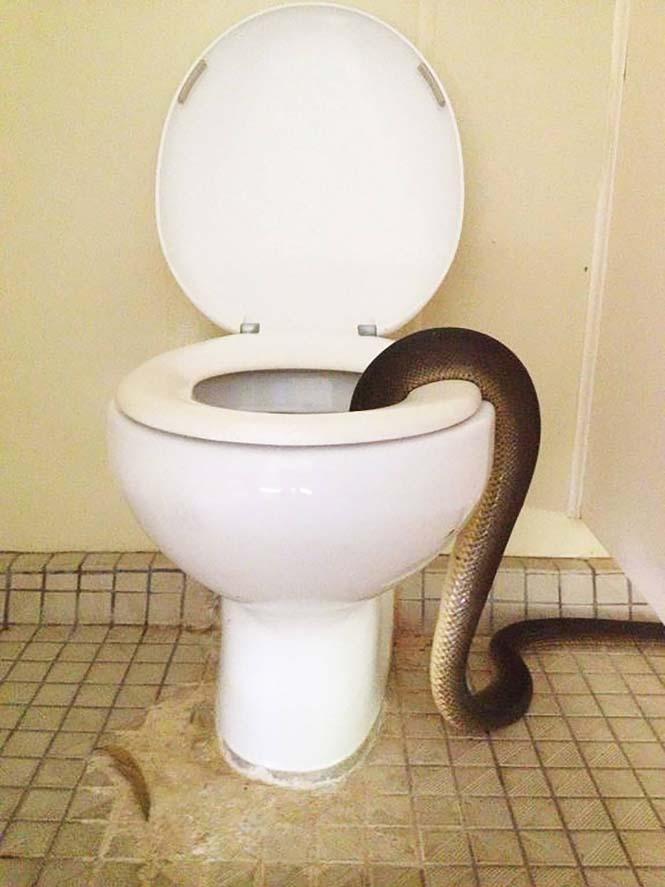 Ανατριχιαστική έκπληξη στις γυναικείες τουαλέτες (3)