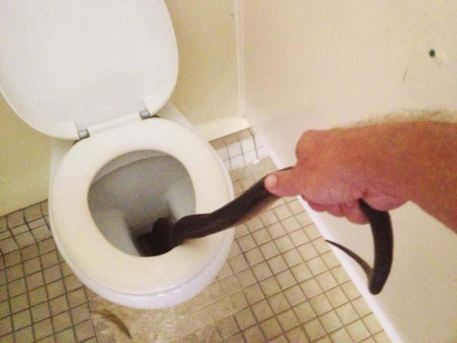 Ανατριχιαστική έκπληξη στις γυναικείες τουαλέτες (4)