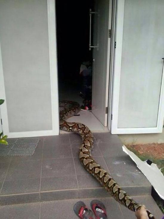 Αυτός ο απρόσκλητος επισκέπτης θα σας κάνει να τρομάξετε (4)