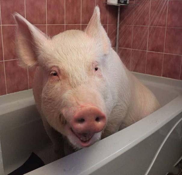 Αστεία και παράξενα στο μπάνιο #2 (7)