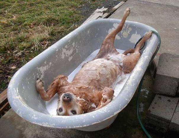 Αστεία και παράξενα στο μπάνιο #2 (12)