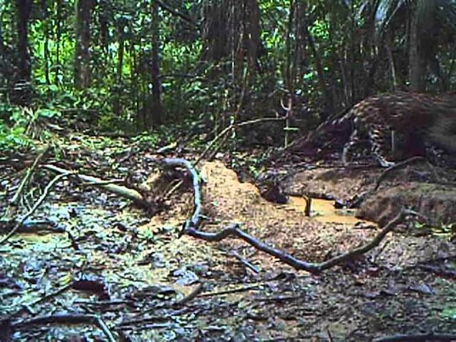 Τοποθέτησε κάμερα στον Αμαζόνιο και κατέγραψε την απίστευτη βιοποικιλότητα του τροπικού δάσους