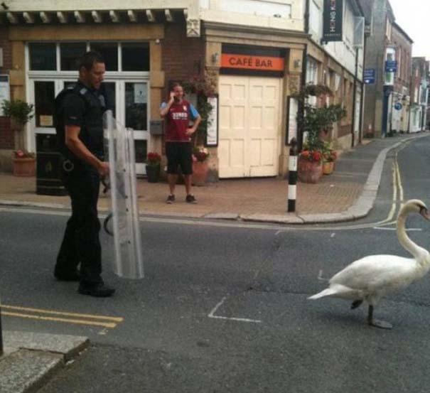 Διασκεδαστικές στιγμές με την μητροπολιτική αστυνομία του Λονδίνου (6)