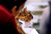 Δημιούργησαν κολάρο που μεταφράζει το νιαούρισμα της γάτας