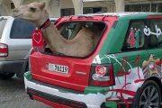 Στο Dubai μπορείς να συναντήσεις κυριολεκτικά τα πάντα... (1)