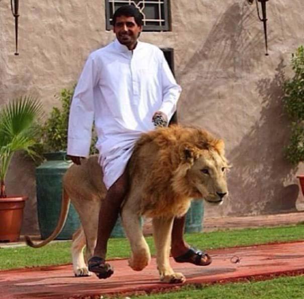 Στο Dubai μπορείς να συναντήσεις κυριολεκτικά τα πάντα... (2)