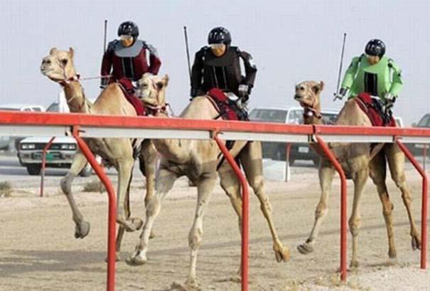 Στο Dubai μπορείς να συναντήσεις κυριολεκτικά τα πάντα... (8)