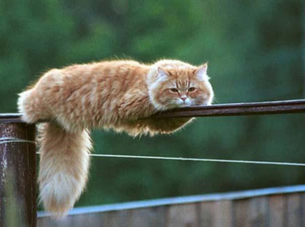 Γάτες που... κάνουν τα δικά τους! #29 (2)