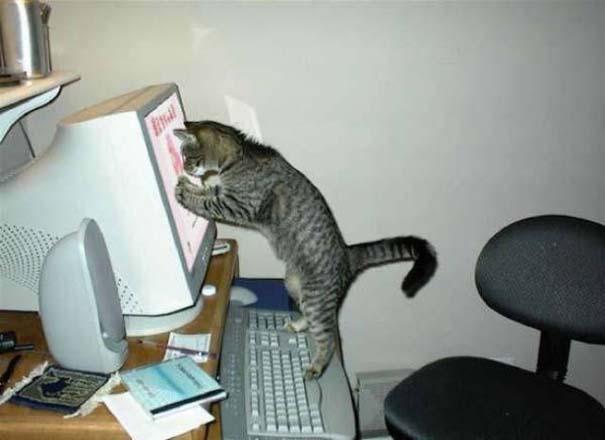 Γάτες που... κάνουν τα δικά τους! #29 (3)