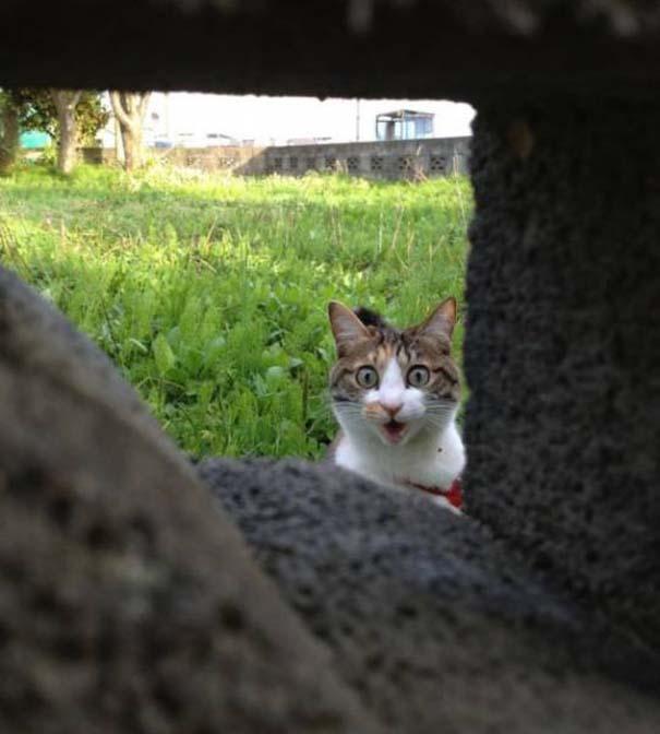 Γάτες που... κάνουν τα δικά τους! #29 (4)