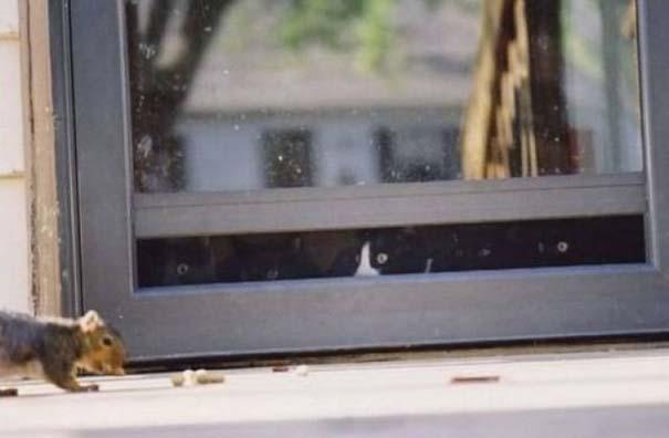 Γάτες που... κάνουν τα δικά τους! #29 (5)