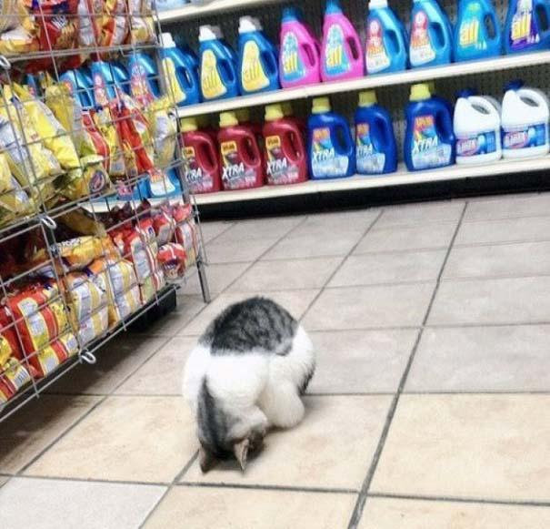 Γάτες που... κάνουν τα δικά τους! #29 (7)