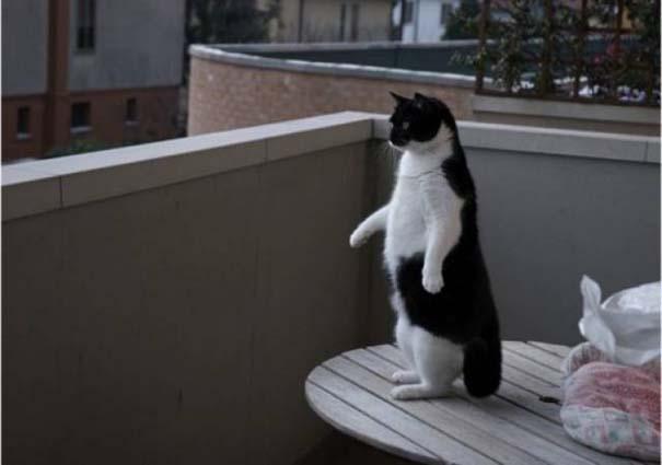 Γάτες που... κάνουν τα δικά τους! #29 (9)