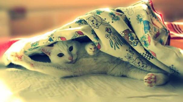 Γάτες που... κάνουν τα δικά τους! #29 (11)