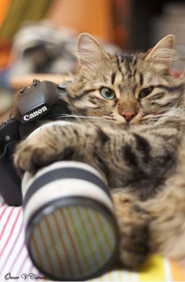 Γάτες που... κάνουν τα δικά τους! #29 (15)