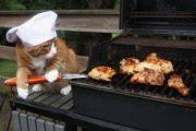 Γάτες που... κάνουν τα δικά τους! #30 (6)