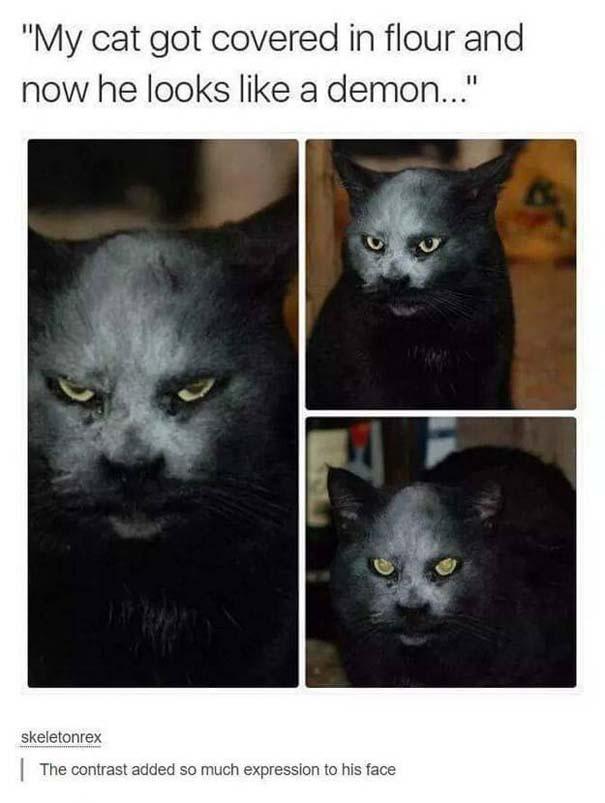 Γάτες που... κάνουν τα δικά τους! #30 (11)