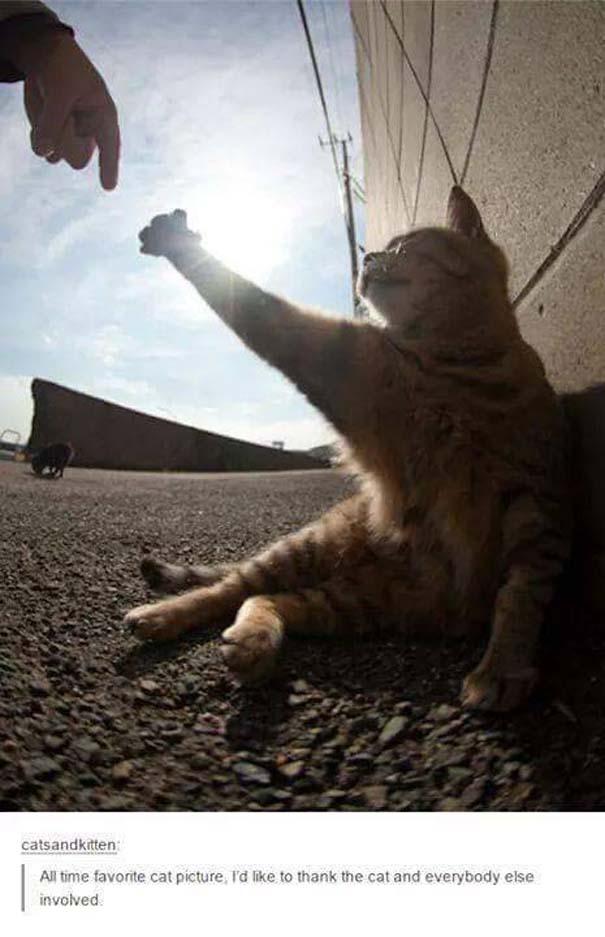 Γάτες που... κάνουν τα δικά τους! #30 (12)