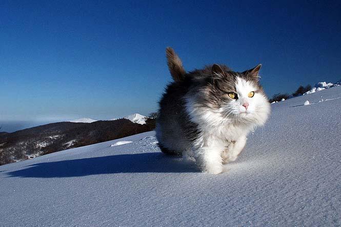 GPS καταγράφει τις κινήσεις των γατών (1)