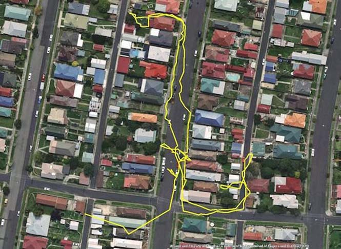 GPS καταγράφει τις κινήσεις των γατών (2)