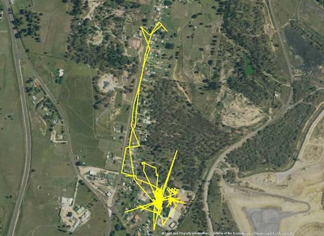 GPS καταγράφει τις κινήσεις των γατών (3)