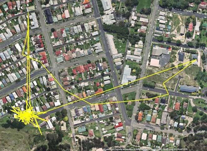 GPS καταγράφει τις κινήσεις των γατών (4)
