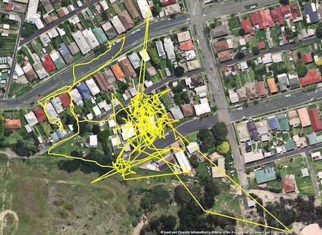 GPS καταγράφει τις κινήσεις των γατών (5)