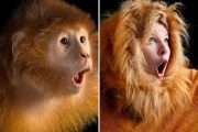 Ξεκαρδιστικές αναπαραστάσεις φωτογραφιών του National Geographic (1)