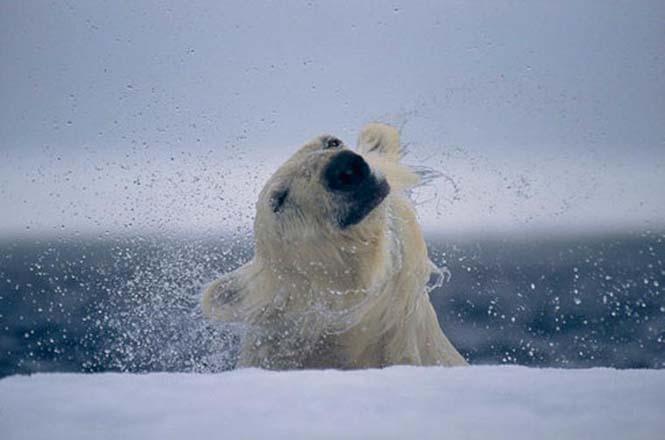 Ξεκαρδιστικές αναπαραστάσεις φωτογραφιών του National Geographic (8)