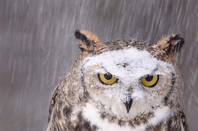 Ξεκαρδιστικές αναπαραστάσεις φωτογραφιών του National Geographic (10)