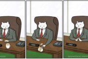 Οι ξεκαρδιστικές περιπέτειες της γάτας επιχειρηματία (1)