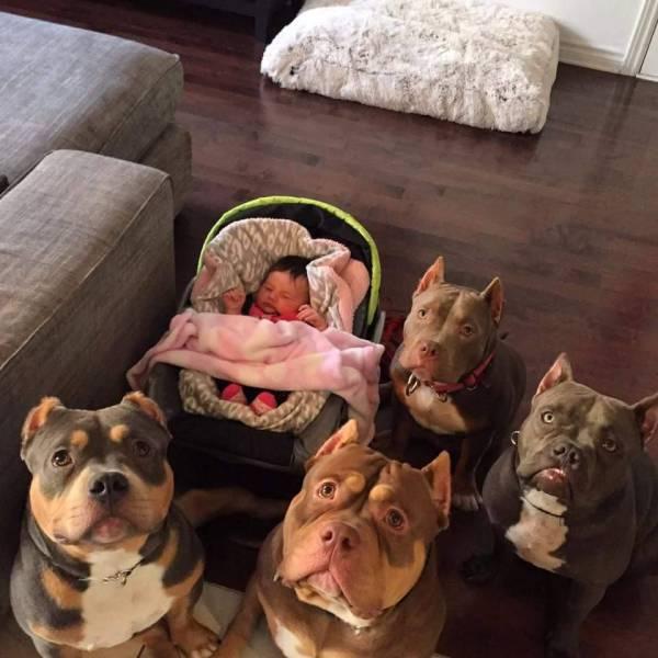 Το μωρό και οι σωματοφύλακες του | Φωτογραφία της ημέρας