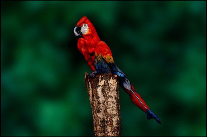 Γυναίκα παπαγάλος | Φωτογραφία της ημέρας
